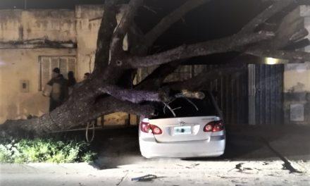 Se desplomó un árbol arriba de un vehículo