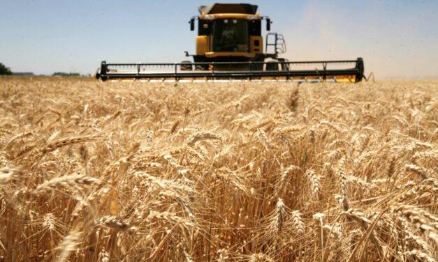 "Gustavo Torassa, sobre la cosecha del trigo: ""La helada fue peor que la falta de lluvia"""