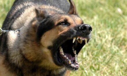 ¡¡ Cuidado!! Perro peligroso atacó a un joven