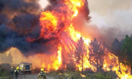 """Brignoni, sobre los incendios en la Patagonia: """"La lluvia alivio un poco pero la situación es dantesca"""""""